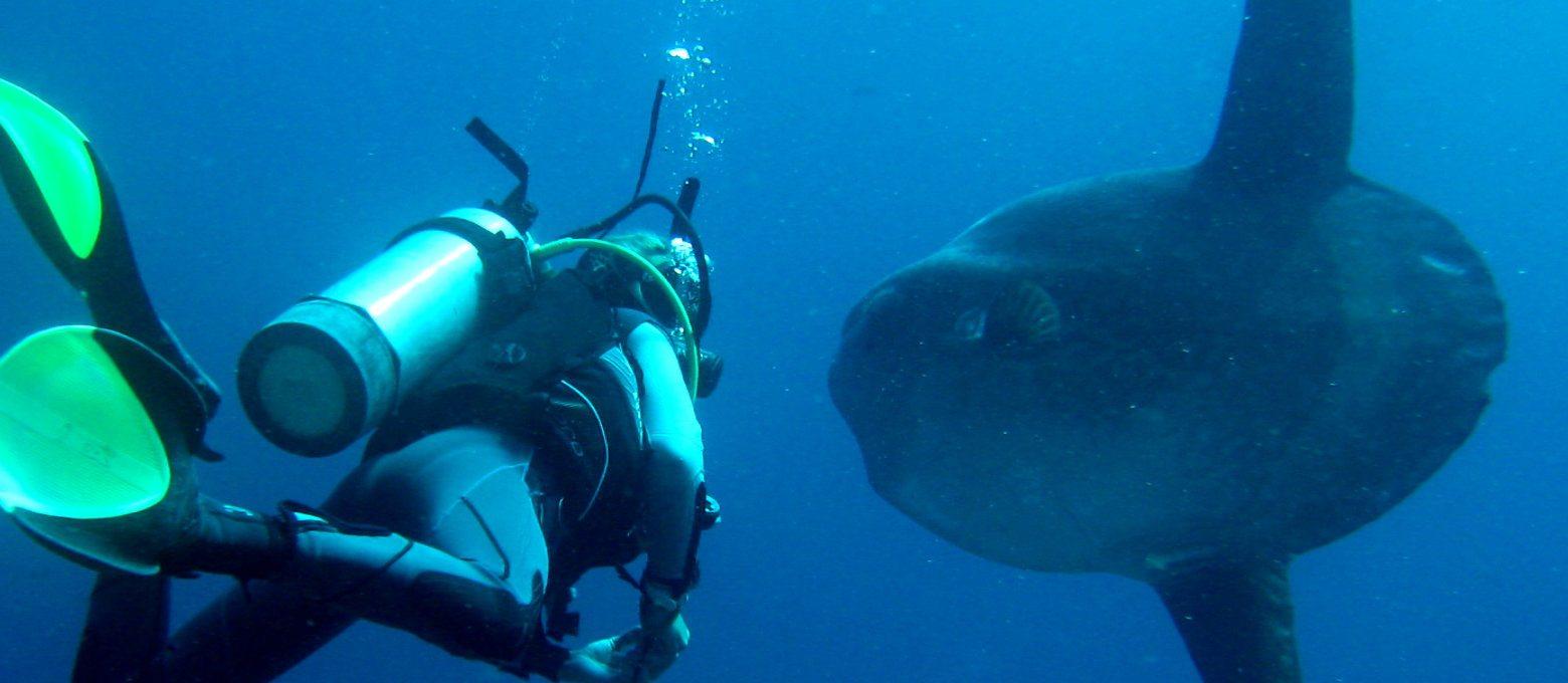 Mola sighting in Bali, Indonesia