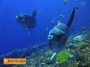Mola Tepekong